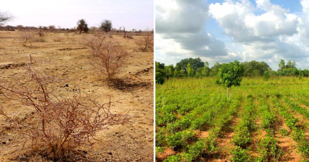 Die grüne Suchmaschine Ecosia pflanzt mit Werbeeinnahmen Bäume